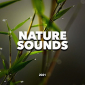 Nature Sounds fra Nature Sounds (1)