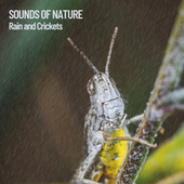 Sounds of Nature: Rain and Crickets by Nature Sounds (1)