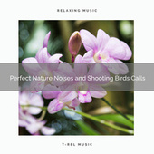 ! ! ! ! ! Perfect Nature Noises and Shooting Birds Calls by Nature Soundscape