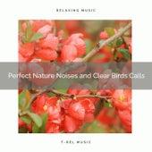 ! ! ! ! ! ! ! ! ! ! Perfect Nature Noises and Clear Birds Calls de The Rest