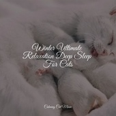 Winter Ultimate Relaxation Deep Sleep For Cats de Cat Music