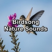 Birdsong Nature Sounds by Spa Relax Music