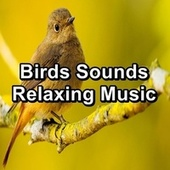 Birds Sounds Relaxing Music by Spa Relax Music