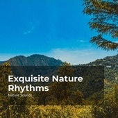 Exquisite Nature Rhythms by Nature Sounds Nature Music (1)