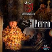 El Perro by Mario Gastelum