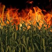 Cornfield on Fire by Demun Jones