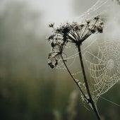30 Sleep and Serenity Rain Sounds by Zen Meditate