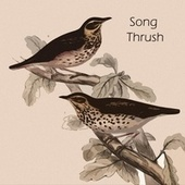 Song Thrush by Jim Reeves