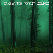 Enchanted Forest Sounds von Ambient Forest