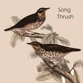 Song Thrush van Bill Evans