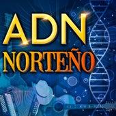 ADN - Norteño de Various Artists