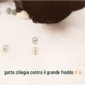 It Is by Gatto Ciliegia Contro Il Grande Freddo