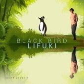 Blackbird by Lifuki