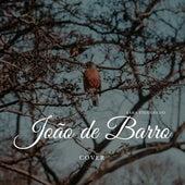 João de Barro de Sara Figueredo