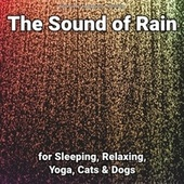 The Sound of Rain for Sleeping, Relaxing, Yoga, Cats & Dogs fra Nature Sounds (1)