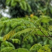 Summer Blissful Summer Rain Sounds for Relaxation & Meditation by Sleep Sound Library