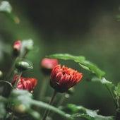 Summer Blissful Summer Rain Sounds for Relaxation & Meditation von Lullabies for Deep Meditation