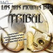 Las Más Picudas del Tribal by Various Artists