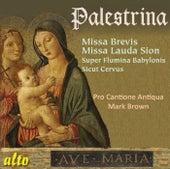 Palestrina: Missa Brevis; Missa Lauda Sion by Pro Cantione Antiqua