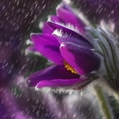 Summer Blissful Summer Rain Sounds for Relaxation & Meditation by Classical New Age Piano Music