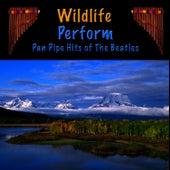 Pan Pipe Hits of The Beatles de Wildlife