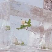 Windflowers by Efterklang