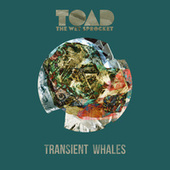 Transient Whales by Toad the Wet Sprocket