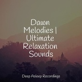 Dawn Melodies   Ultimate Relaxation Sounds de Massage Tribe
