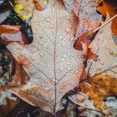 Rain Sounds: Sleepy Autumn Day fra Rain Sounds For Sleep