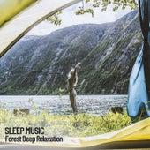 Sleep Music: Forest Deep Relaxation de Deep Sleep Music Collective