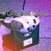 57 Cultivate Peace at the Spa de Nature Sounds Nature Music (1)