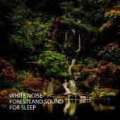 White Noise: Forestland Sound For Sleep de White Noise Sleep Therapy