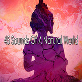 45 Sounds of a Natural World by Massage Therapy Music
