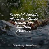 Essential Sounds of Nature Music   Relaxation   Soothing Melodies by Sleeping Baby Songs