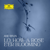 Lo, How a Rose E'er Blooming by Ane Brun