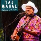 Queen Bee Live de Taj Mahal