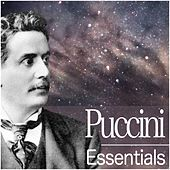 Puccini Essentials by Various Artists