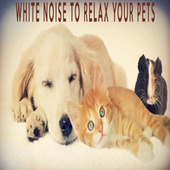 White Noise To Relax Your Pets by Color Noise Therapy