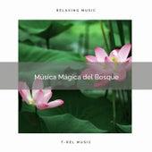 1 Música Mágica del Bosque de Música Zen Relaxante
