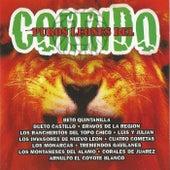 Puros Leones del Corrido de Various Artists