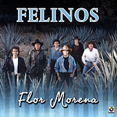 Flor Morena by Felinos