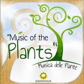 Music of the Plants (Musica Delle Piante) by Damanhur