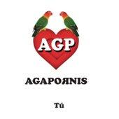 Tú de Agapornis
