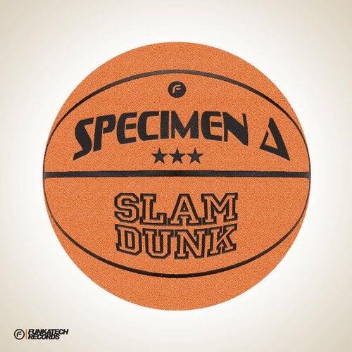 Slam Dunk by Specimen A