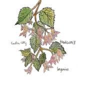 Begonias de Caitlin Cary