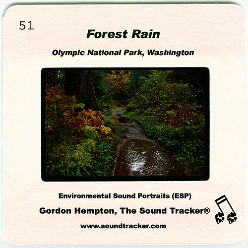 Forest Rain by Gordon Hempton