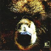 The Bear by Element Eighty