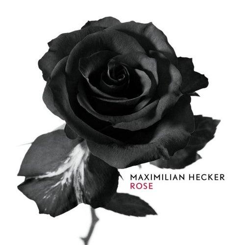 Rose von Maximilian Hecker