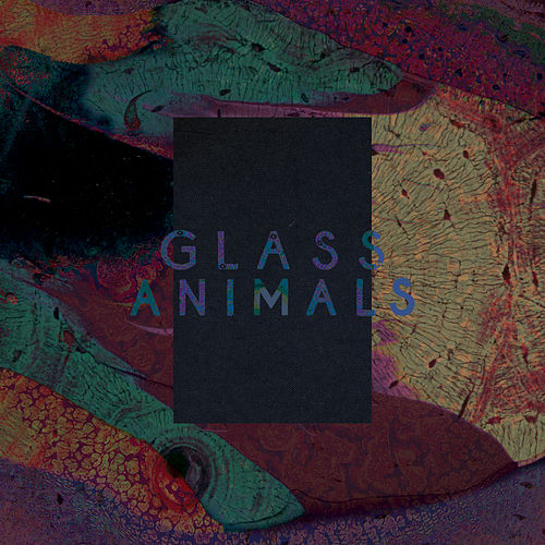 Black Mambo / Exxus de Glass Animals