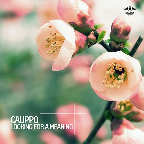 Looking for a Meaning von Calippo